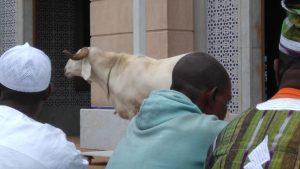 طريقة أداء صلاة عيد الأضحى المبارك 1