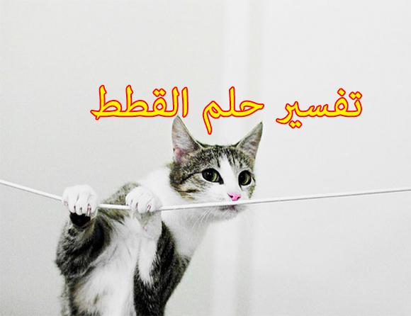 تفسير حلم القطط