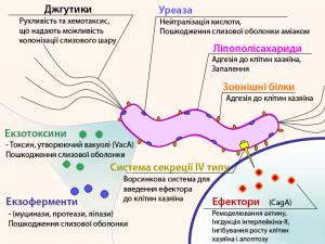 اعراض جرثومة المعدة بالتفصيل