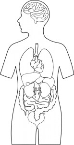 شكل جرثومة المعدة